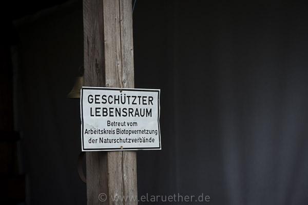 Besuch in der Kölner Wildnis
