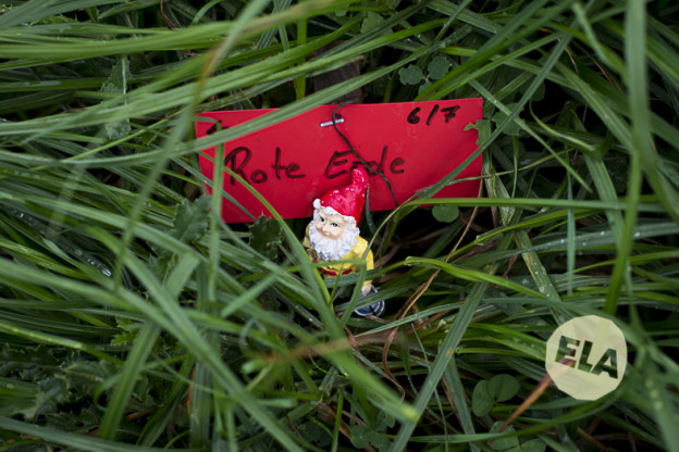 food-fotografie-queerbeet-rote-bete-eintopf_ELA7431